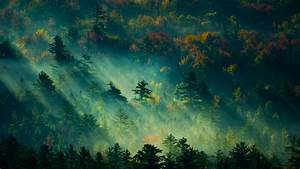 Wallpaper, Trees, Light, Green, 4k, Nature, 19568
