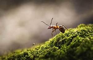 Ameisenplage Im Garten Bekämpfen : ameisen bek mpfen haus garten top10 mittel im test ~ Articles-book.com Haus und Dekorationen