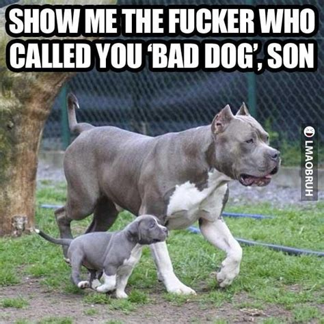 Funny Pitbull Memes - funny quotes about my pitbull quotesgram