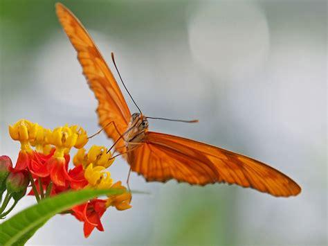 Botanischer Garten München Schmetterlinge by Tropische Schmetterlinge