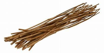 Sticks Bamboo Bunch Plantation Padma Pp Homelement