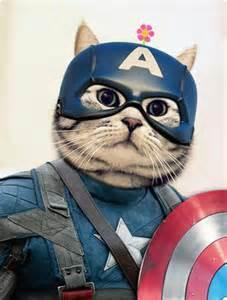 captain cats captain america cat 127 0 0 1