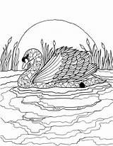 Swan Eckersleys sketch template