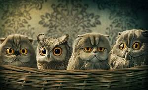 Free Hd Funny Owl Desktop Wallpapers Download