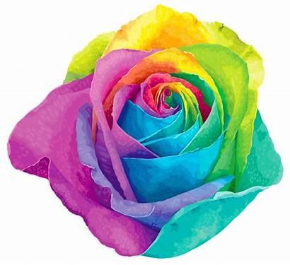 Rainbow Transparent Rose Roses Clip Clipart Multicolored