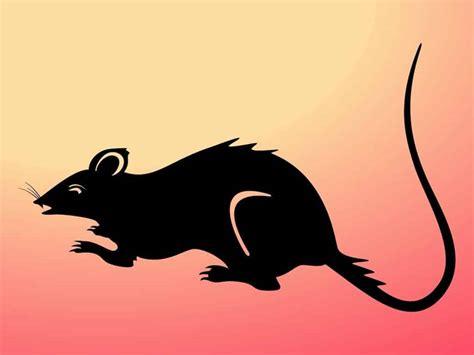 rat en anglais s ennuyer comme un rat mort alpine school