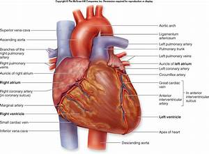 Unit 4 Pbs Heart