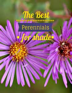 Best Perennial Shade Flowers