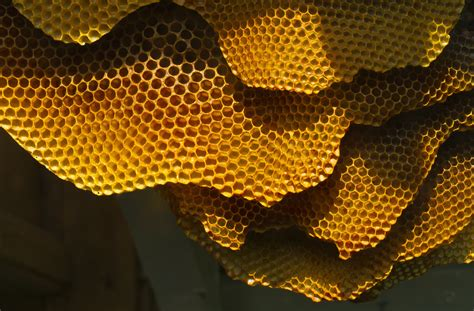 house designs file honeycomb structure 6248780733 jpg wikimedia commons