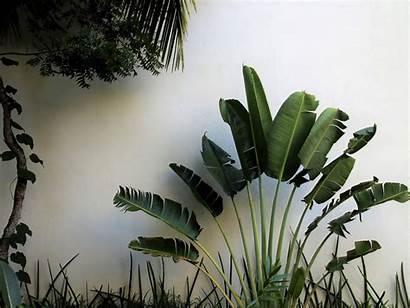 Plants Tropical Palm Plant Grow Easily Desert