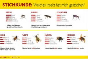 Wespen und Bienen - focus