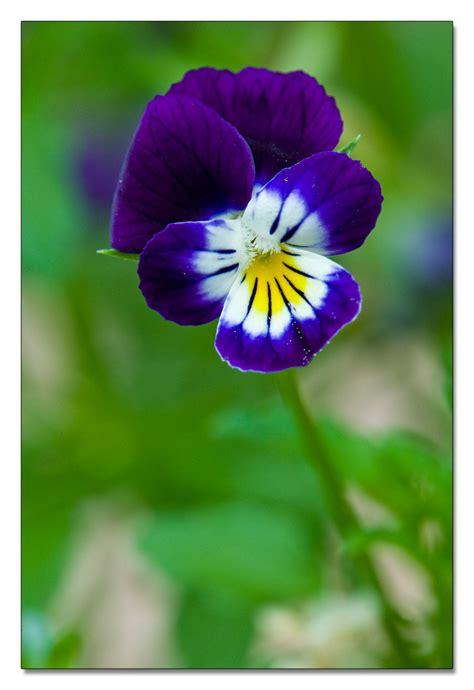 fiore viola speciale moda donna primavera estate viola fiore