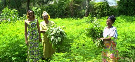 cuisine familiale sauver la forêt du mayombe au congo brazzaville agence micro projets