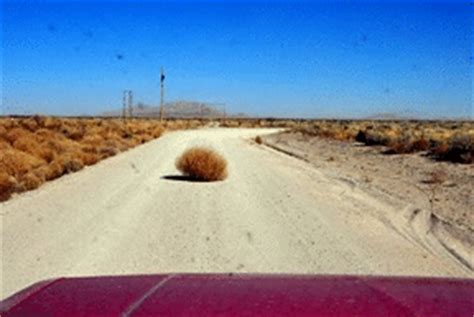 Tumbleweed GIF - Find & Share on GIPHY