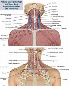 8  Muscles Of The Spine And Rib Cage