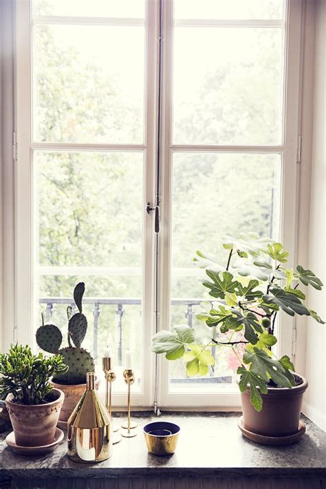Indoor Window Sill Plants by Windowsill Decor With Indoor Plants Windowsill Decor In