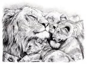 Lion Family Sketch Drawing