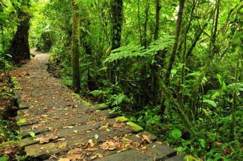exploring monteverde cloud forest javis travel blog