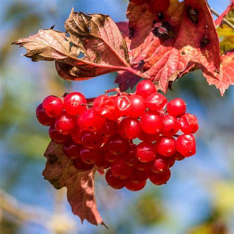 Beeren Im Herbst by Rote Beeren Im Herbst Foto Bild Pflanzen Pilze