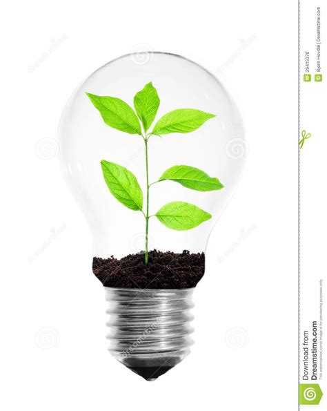 light bulb with plant stock photo image 29415370