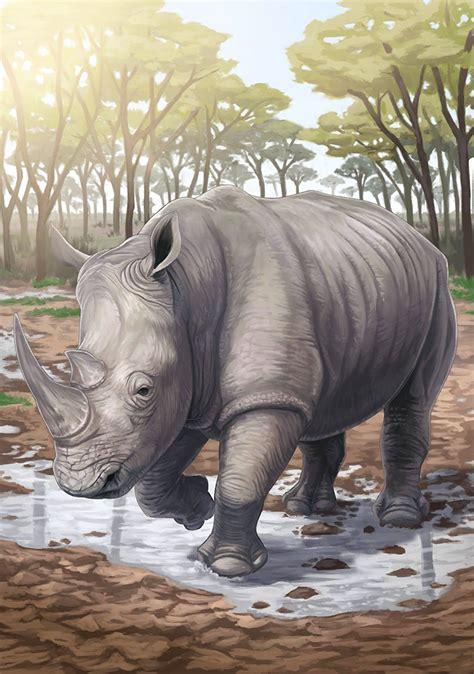 White Rhinoceros Photo Japari Library The Kemono
