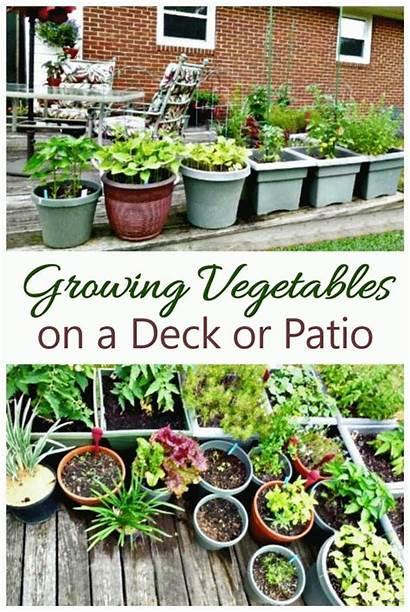 Container Vegetable Gardening Garden Patio Vegetables Growing