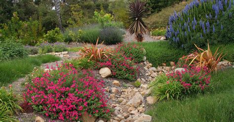 sunny slope  drainage wash perennials  edibles