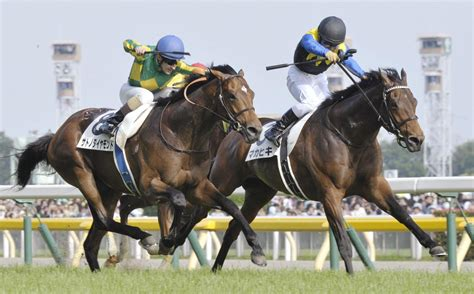 japan horse racing news japanese derby  preview