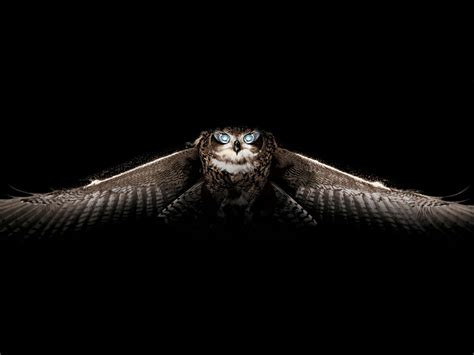 Creepy Owl Wallpapers by Owl Wallpapers Animals Wiki Pictures Stories