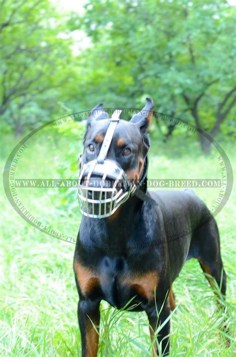 training  walking extra light weight muzzle  doberman  wire basket muzzle