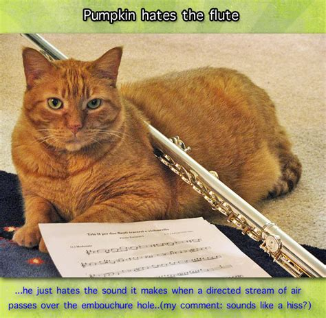 Sounds That Cats Hate