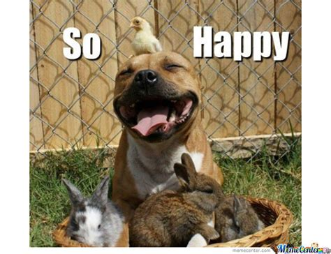 Happy Dog Meme - the dog im so happy by zito meme center