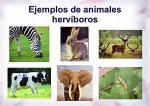 Animales Herbívoros: Información, Lista, Ejemplos y Nombres Animalesde net