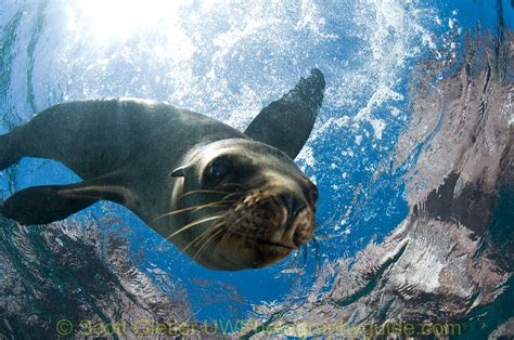 sea  cortez scuba diving bluewater dive travel