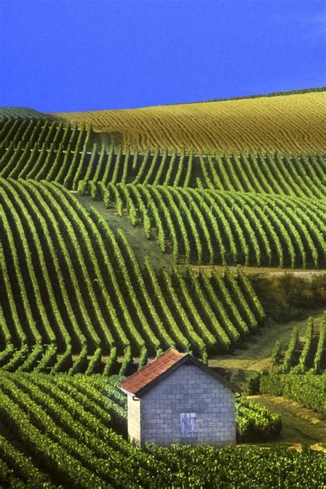 Wallpaperscatalogcom  Panoramic View Of Vineyards