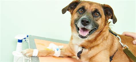 What Causes Seizures In Dogs?