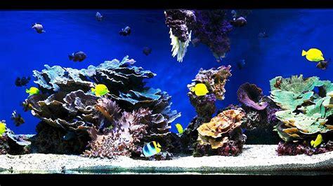 saltwater aquariums how to aquascape a saltwater aquarium aquarium care youtube