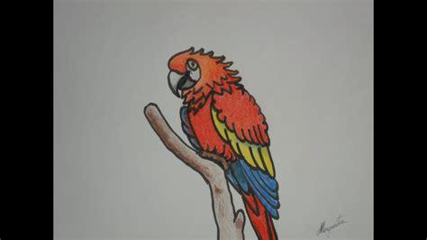 Como dibujar una GUACAMAYA en caricatura DIBUJO INFANTIL