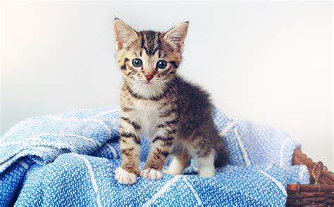 Search For Katz 8 fakten die sie noch nicht 252 ber katzen kennen servus