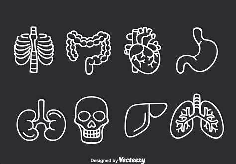 intestine  vector art   downloads