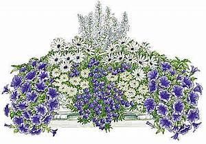 Hängepflanzen Für Balkonkästen : balkonpflanzen set blau wei er traum balkonk sten ~ Michelbontemps.com Haus und Dekorationen