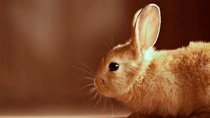 Rabbit Animal Wallpapers Animals Walls