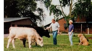 Backyard Beef - raising your own beef for food homesteading and