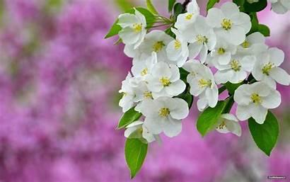 1080p Flowers Wallpapers Wallpapersafari Flowerflower