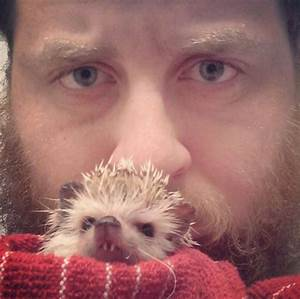 After Losing A Tooth, Norman The Hedgehog Became An ...