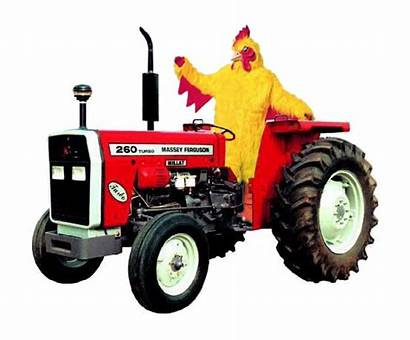 Chicken Chickens Tractor Raising Tractors Different Somebody