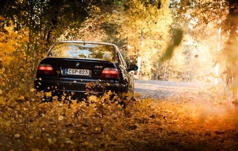 wallpaper leaves lights bmw bmw black  autumn