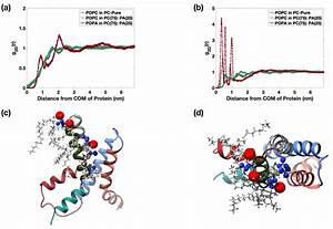 Md Simulations Reveal Vsd Solvation By Popa Lipids  A