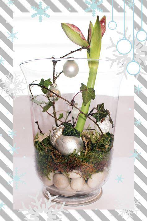 Amaryllis Im Glas Dekorieren by Weihnachtsdeko Im Glas Videkiss Decor Ideas