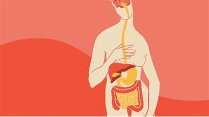 Gut Brain Connection Nutrition Works Role Hindes